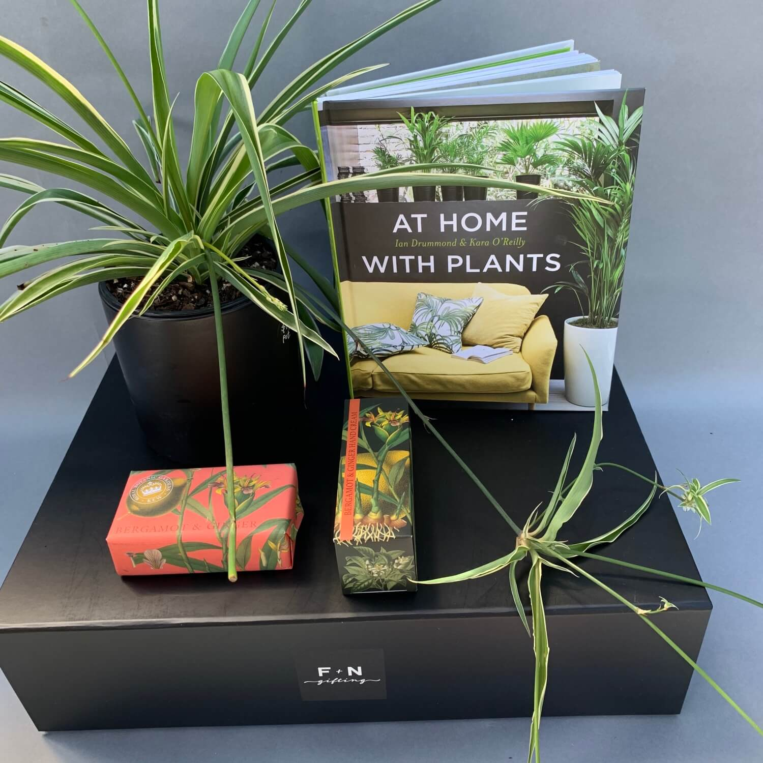 At Home with Plants Gift Box