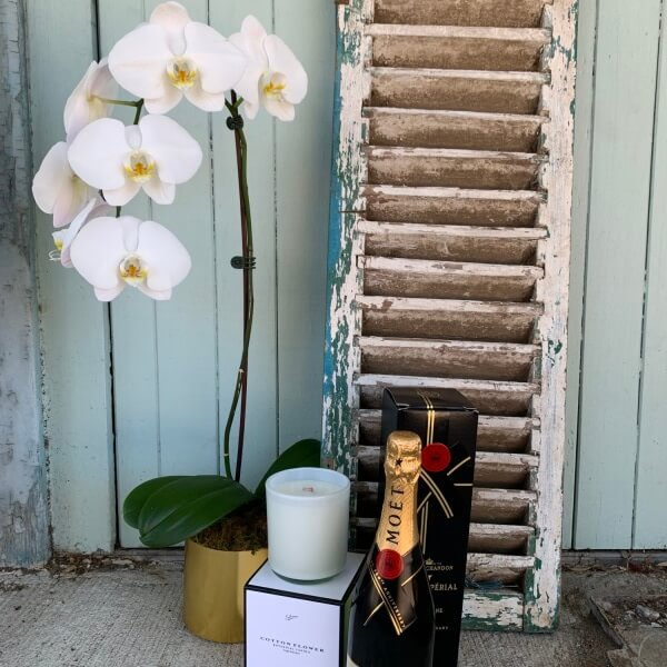 Phalaenopsis Kit and Kaboodle